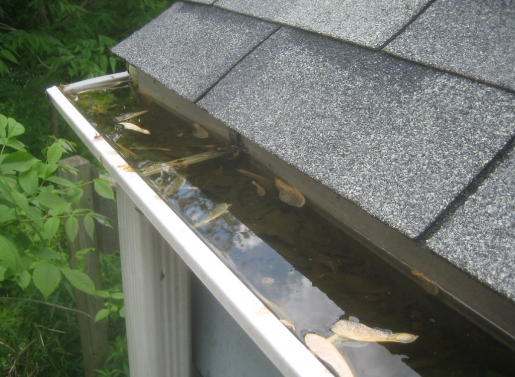 water services roofing